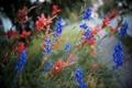 Картинка цветы, природа, парк, растение