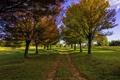 Картинка дорога, осень, деревья, аллея