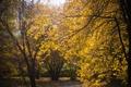 Картинка листья, желтый, солнце, природа, осень, дерево