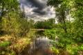 Картинка лес, деревья, природа, река, фото