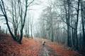 Картинка осень, лес, девушка, деревья, шапка, человек, куртка
