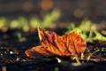 Картинка осень, трава, макро, лист, фото, фон, земля