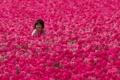 Картинка тюльпаны, поле, девочка