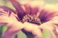 Картинка close up, rose, beautiful, flower, красивая, romantic, цветок