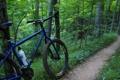 Картинка лес, лето, тропа, bike