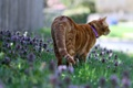Картинка кошка, лето, цветы