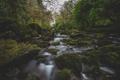 Картинка камни, река, ветки, лес, деревья, дождливый, мост