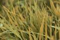 Картинка трава, листья, капли, роса, влага, желтые