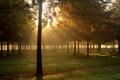 Картинка осень, трава, свет, природа, роса, парк, утро
