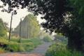 Картинка ветки, дерево, провода, село, деревня, колодец, поселок. дорога