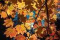 Картинка листья, деревья, осень, небо, ветка