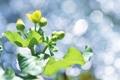 Картинка зелень, макро, свет, природа, зеленый, блики, растение