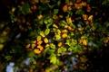 Картинка осень, лес, листья, свет, ветки, дерево