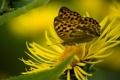 Картинка цветок, метелик, макро, бабочка
