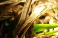 Картинка обои, трава, фото, растения, фон, макро