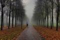 Картинка осень, туман, парк, люди, утро, фонари, пробежка
