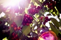 Картинка листья, вишня, ягода, веточки