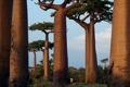 Картинка деревья, фото, обои, человек, баобаб, бег, австралия
