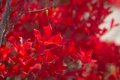 Картинка листья, ветки, дерево, краски