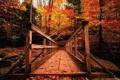 Картинка осень, мост, парк