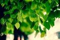 Картинка природа, обои, листва, макро