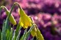 Картинка капли, макро, цветы, природа