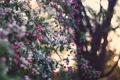 Картинка природа, сад, яблоня