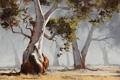 Картинка деревья, природа, арт, солнечно, artsaus, eucalyptus tree