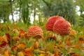 Картинка осень, трава, листья, макро, грибы