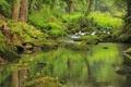 Картинка Hatea, река, фото, природа, мох, камни, Новая Зеландия