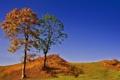 Картинка осень, небо, трава, деревья, природа, холмы, обои