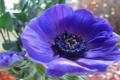 Картинка сад, цветок, лепестки, природа