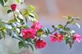 Картинка цветок, листья, птица, ветка, камелия, белоглазка