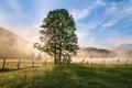 Картинка туман, дерево, утро, Michael Breitung, Бовария