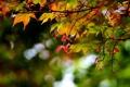 Картинка осень, лес, листья, цвета, капли, природа, фон