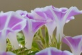 Картинка природа, растение, трава, лепестки, цветы