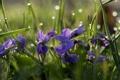 Картинка зелень, трава, листья, солнце, капли, лучи, цветы
