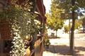 Картинка листья, корзинка, цветы