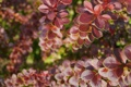 Картинка макро, природа, растение