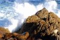 Картинка море, волны, пена, природа, камни