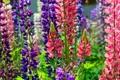 Картинка стебель, природа, луг, поле, лепестки, цветы