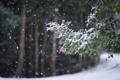 Картинка холод, зима, цветы, листва, ветка, снегопад, цветение