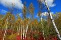 Картинка осень, небо, облака, деревья, склон, осина