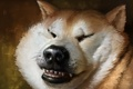 Картинка морда, зубы, нос, арт, пес