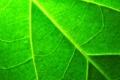Картинка макро, лист, растение, зелёный, прожилки