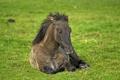 Картинка трава, конь, отдых, лошадь