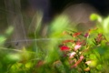 Картинка природа, растения, макро
