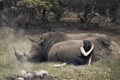 Картинка девушка, ситуация, носороги