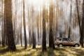 Картинка Деревья, Auto, Land Rover