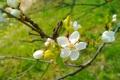 Картинка ветка, весна, цветение, blossom